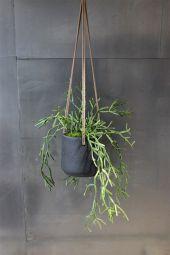 Hanger Trigona