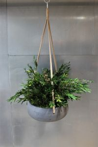 Hanger Longifolia